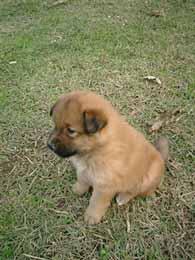 201103dog.jpg