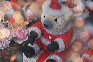 christmasbear.jpg